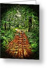 Road In The Wilderness Greeting Card
