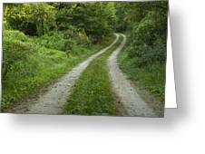 Road In Woods 1 D Greeting Card