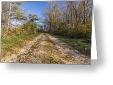 Road In Woods Autumn 4 A Greeting Card