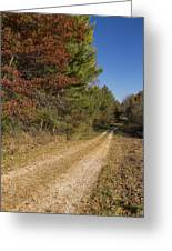 Road In Woods Autumn 5 Greeting Card