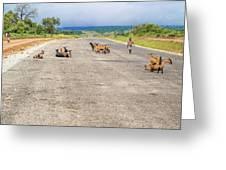 Road In Zambia Greeting Card
