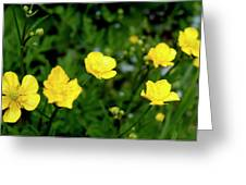 Road Of Flowers Greeting Card