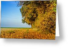 Road Of Leaves Greeting Card