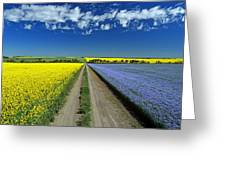 Road Through Flowering Flax And Canola Greeting Card