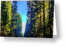 Road Through The Forest Greeting Card