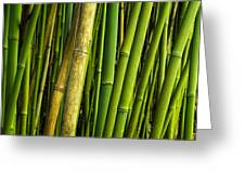 Road To Hana Bamboo Panorama - Maui Hawaii Greeting Card