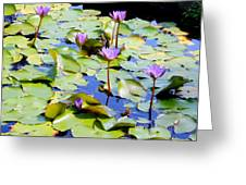 Road To Hana Water Lilies Greeting Card