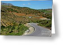 Road Winding Between Fields Of Olive Trees Greeting Card