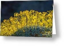 Roadside Flowers Greeting Card