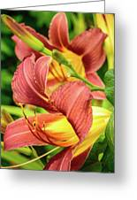 Roadside Lily Greeting Card