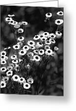 Roadside Wildflowers Greeting Card