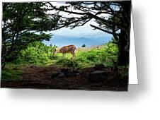 Roan Deer Greeting Card