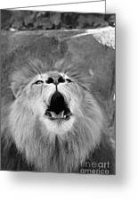 Roar  Black And White Greeting Card