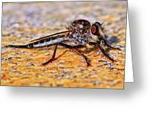 Robber Fly 001 Greeting Card
