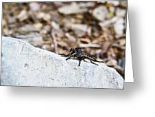 Robber Fly Stalking Greeting Card