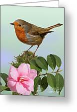 Robin And Camellia Flower Greeting Card
