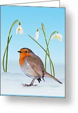 Robin And Cold Snowdrops Greeting Card