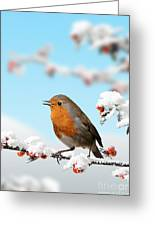 Robin And Cotoneaster With Snow Greeting Card