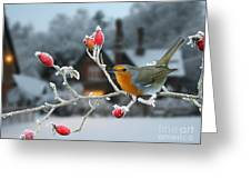 Robin And Rose Hips Greeting Card