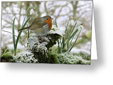Robin And Snowdrops Greeting Card