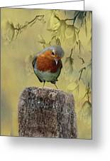Robin Bird Greeting Card