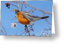 Robin Eying Berries Greeting Card