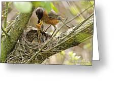 Robin Feeding Young Greeting Card
