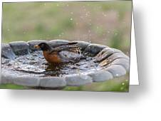 Robin In Bird Bath New Jersey  Greeting Card