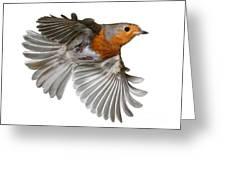 Robin In Flight Greeting Card