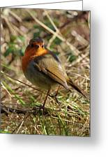 Robin In Hedgerow 2 Inch Donegal Greeting Card