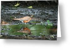 Robin In Reflection Greeting Card
