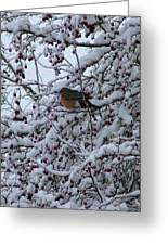 Robin In Snow Greeting Card