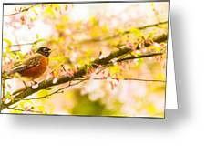 Robin In Spring Blossom Cherry Tree Greeting Card
