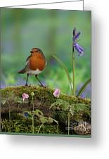 Robin In Spring Wood Greeting Card