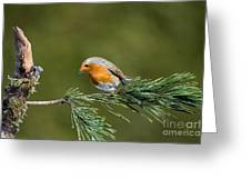 Robin In The Garden Greeting Card