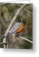 Robin In Tree Greeting Card