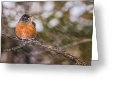 Robin In Winter Greeting Card