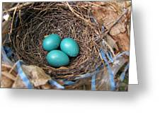Robin Nest Greeting Card