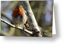 Robin On Branch Donegal Greeting Card