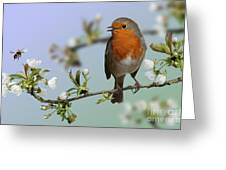 Robin On Cherry Blossom Greeting Card