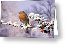 Robin On Cotoneaster With Snow Greeting Card
