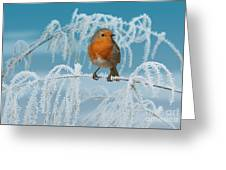 Robin On Frosty Grass Greeting Card