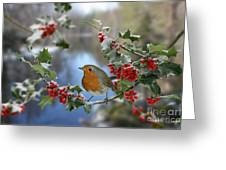 Robin On Holly Branch Greeting Card