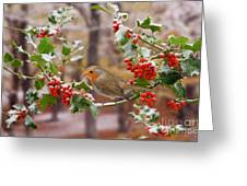 Robin On Holly Twigs Greeting Card