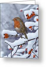Robin On Snow-covered Rose Hips Greeting Card