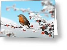 Robin On Snowy Cotoneaster Greeting Card