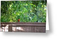 Robin On The Backyard Fence Greeting Card