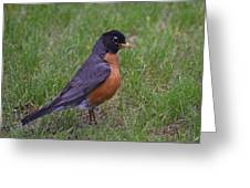 Robin On The Lawn Greeting Card