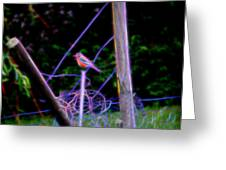 Robin On The Wires Greeting Card