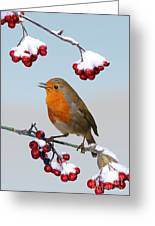 Robin On Winter Cotoneaster Greeting Card